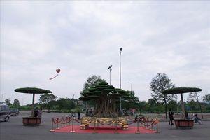 Hà Nội: Có gì đặc biệt ở cây sanh 'Đại thế vân tùng' giá 10 tỷ dát tới 5 cây vàng?