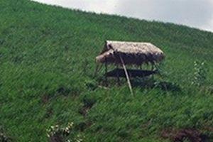 Chủ tịch hội nông dân xã chết treo cổ trong chòi