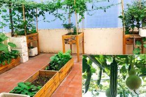 Vườn rau trồng trong thùng gỗ xanh mướt trên sân thượng của gia đình Sài Gòn
