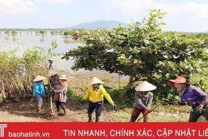 Nhờ nguồn tài trợ từ Vương quốc Bỉ, Thạch Hạ trồng mới 5 ha 'rừng chắn sóng'