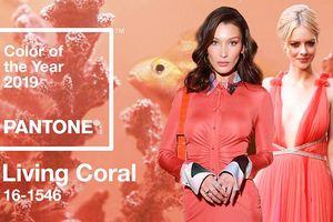Pantone công bố cam san hô là 'Color of The Year', thống trị năm 2019