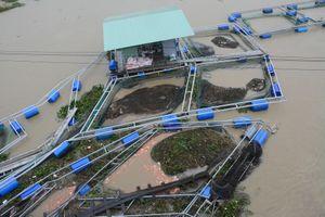 60 tấn cá bị nước cuốn trôi vì mưa lớn, thiệt hại hàng tỷ đồng