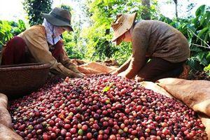 Đáp ứng đầy đủ các quy định, nông sản Việt không lo khó khi vào với thị trường EU