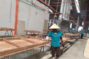 Việt Nam chuẩn bị thực thi Hiệp định VPA/FLEGT như thế nào?