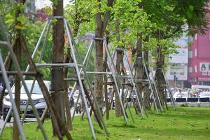 Tiết lộ số tiền chi trồng hơn 1 triệu cây xanh tại Hà Nội