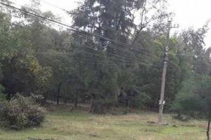 Vụ nhiều cán bộ được cấp đất rừng: Sự 'siêu tốc' bất thường