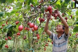 Xúc tiến phát triển vùng nguyên liệu nông sản tại Lâm Đồng
