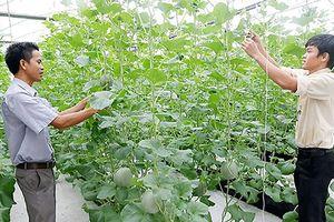 Nông dân học tập nhiều mô hình nông nghiệp