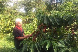 Nâng cao đời sống người nông dân và chất lượng cà phê Việt
