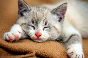 Những lợi ích về sức khỏe khi nuôi mèo