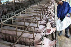Nhập khẩu nhiều loại nông sản tăng mạnh