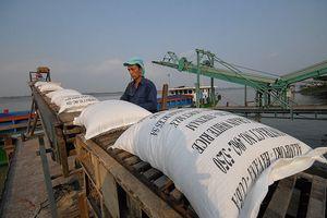 Xuất khẩu gạo: Doanh nghiệp không mừng vì giá cao