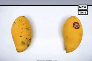Khó tin chiếc nhãn dán giúp trái cây tươi lâu hơn 10 ngày và an toàn tuyệt đối!