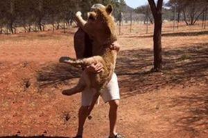 Clip hot (11/12): Sư tử làm nũng với người, người đàn ông tự thiêu do giận vợ