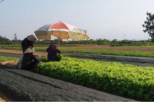 Nông nghiệp ứng phó với biến đổi khí hậu