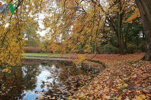 Mùa thu Hà Lan lãng mạn và quyến rũ đến nao lòng