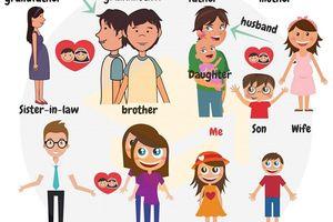 Hình ảnh giúp dễ nhớ từ vựng tiếng Anh chỉ thành viên gia đình