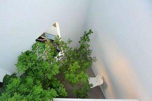 Cách thiết kế nhà trong ngõ nhỏ
