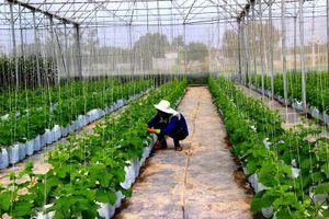 Tây Ninh phát triển nông nghiệp công nghệ cao gắn với chế biến