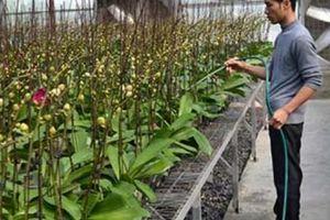 Hà Nội thông qua chính sách khuyến khích phát triển nông nghiệp