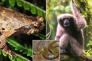 Phát hiện thêm hơn 150 loài mới ở tiểu vùng sông Mekong mở rộng