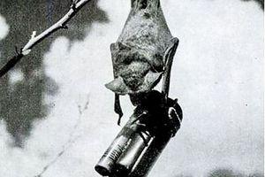 Vũ khí kỳ dị thời thế chiến 2 - Kỳ 1: Sử dụng động vật