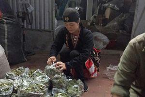 Thảo dược lành tính giúp hàng vạn người Việt tìm được giấc ngủ sâu