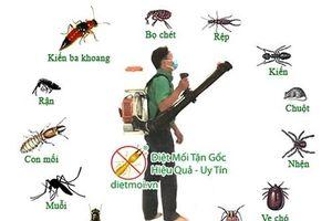 Sử dụng hóa chất diệt côn trùng ngày càng tăng tại Việt Nam