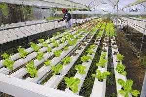 Lối mở nông nghiệp đa chức năng