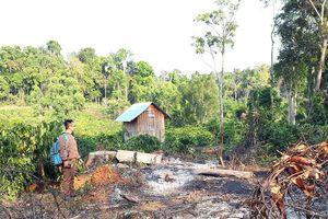 Khó giải tỏa đất rừng bị lấn chiếm