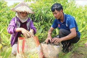Đắk Lắk khuyến cáo người dân thận trọng với cây trồng mới
