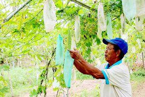 Người trồng rau miền Trung điêu đứng