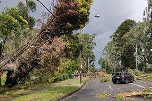 Australia: Giông lốc, mưa đá gây mất điện toàn bang New South Wales