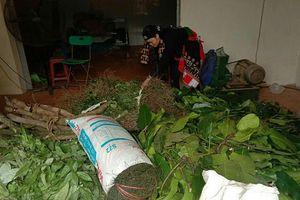 Thảo dược núi rừng 'Tản Viên Sơn' chữa trị tận gốc bệnh mất ngủ