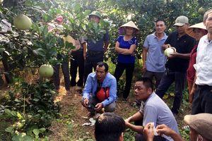 Dạy nghề tại ruộng: Cách làm hay và hiệu quả
