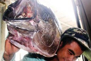 Làng câu cá 'khổng lồ' mà xây được 'biệt phủ'