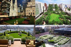 Không gian xanh và ước vọng của người dân đô thị