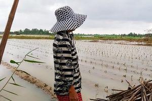 Mưa lũ gây thiệt hại nặng nề cho nông dân các tỉnh miền Trung