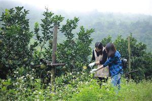 Bón phân Văn Điển cho cây có múi lúc 'ngủ đông'