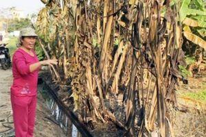 Thanh Hóa: Hãi hùng cảnh muông thú bị chết vì 4.000 lít dầu tràn