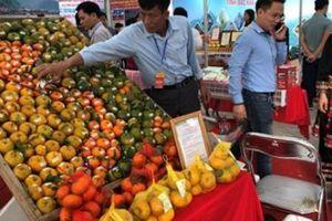 Người dân Thủ đô thích thú thưởng thức đặc sản cam, quýt Bắc Kạn