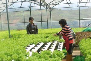 Lợi thế phát triển nông nghiệp thông minh, ứng dụng 4.0 giảm giá thành