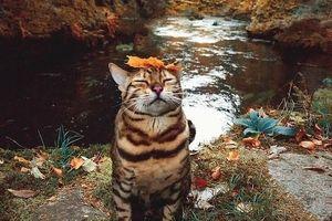 15 hình ảnh vui nhộn chứng minh mèo là diễn viên xuất sắc nhất