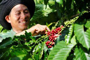 Cà phê phin nguyên chất: 'át chủ bài' trong cuộc chiến giành thị phần