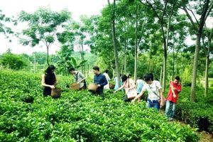 Phát triển du lịch nông thôn ở Hà Nội: Chưa xứng với tiềm năng