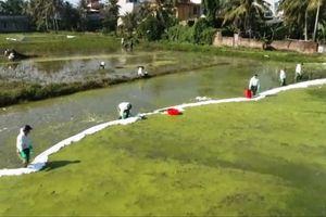 Mất nửa tháng để khắc phục sự cố tràn 4.000 lít dầu ở Thanh Hóa