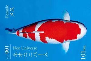 Vì sao cá Koi 'Huyền thoại' giá tới 42 tỷ đồng, đắt nhất lịch sử?