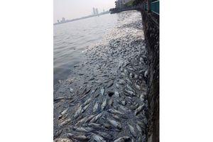 Hà Nội: Lấy nước sông Hồng 'cứu' hồ Tây và sông Tô Lịch?