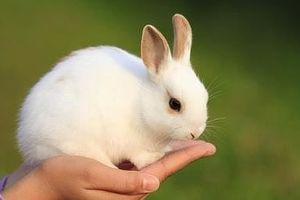 Ghép gen thỏ vào cây thành bộ lọc không khí