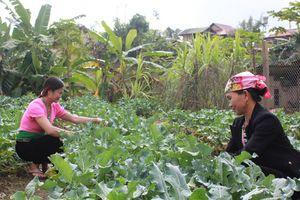 Nâng cao kỹ năng trồng rau sạch và an toàn thực phẩm cho phụ nữ